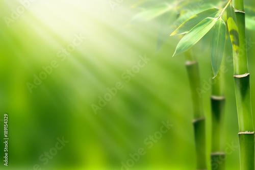 bambus w wiosennym słońcu
