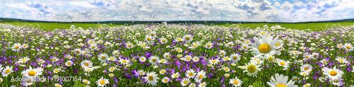panorama pejzaż wiosna z kwitnących kwiatów na łące