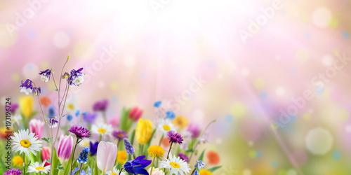 Natury tło z dzikimi kwiatami