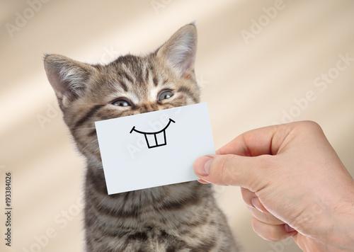 śmieszny kot z uśmiechem na tekturze
