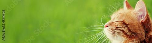 Baner z kotem - szablon nagłówka - prosta strona internetowa