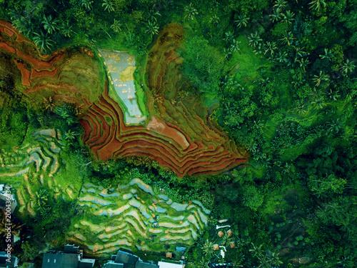 Widok z góry lub zdjęcia lotnicze świeżych zielonych i żółtych pól ryżowych. Taras ryżowy w Bali