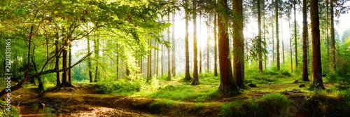 Piękny las wiosną z jasnym słońcem świecącym przez drzewa