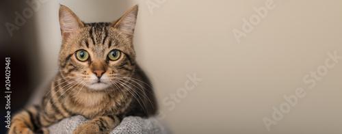 Zrelaksowany kot domowy w domu, w domu