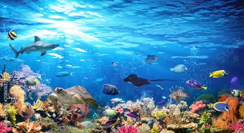 Podwodna Scena Z Rafy Koralowej I Egzotyczne Ryby