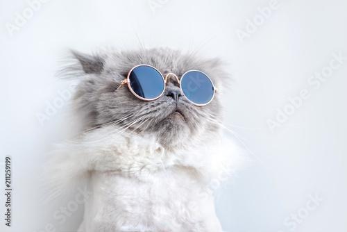 zabawny portret kota w okularach przeciwsłonecznych