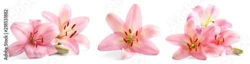 Zestaw z piękne lilie na białym tle