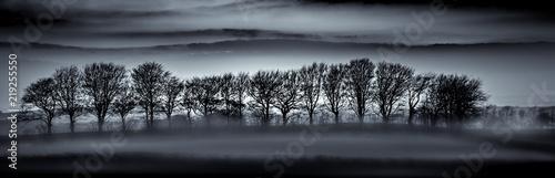 Sylwetki drzewa we mgle, Cornwall