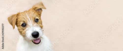 Szczęśliwy uśmiechnięty dźwigarki Russell teriera psa zwierzęcia domowego szczeniak - sieć sztandar z kopii przestrzenią