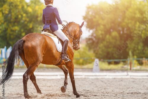 Młoda dziewczyna na zatoce konia wykonując jej test ujeżdżenia