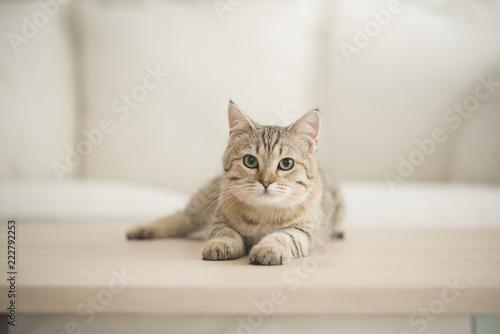 Śliczny kota lying on the beach na drewnianym stole w żywym pokoju