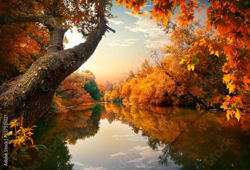 Pomarańczowa jesień na rzece