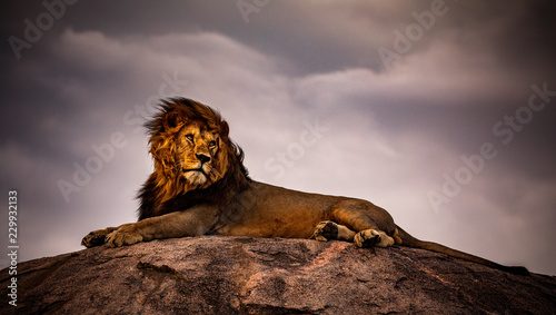 lion on a background of blue sky