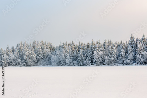 Winter coniferous forest with snow and frost from a frozen lake