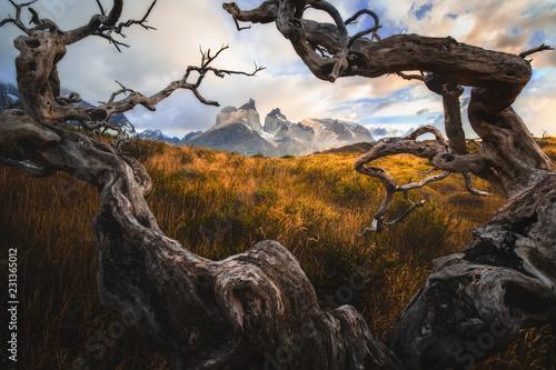 Park Narodowy Torres del Paine. Pojęcie turystyki ekstremalnej i aktywnej. Wspaniałe chmury ze starym drewnem. Pokryte śniegiem czarne skały Los Cuernos