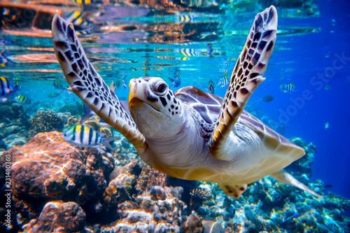 Żółw morski pływa pod wodą na tle raf koralowych
