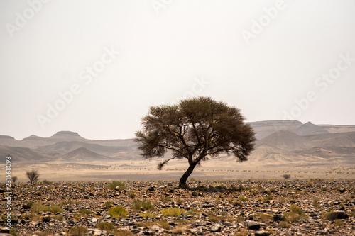 Samotne drzewo w środku skalistej pustyni Maroka