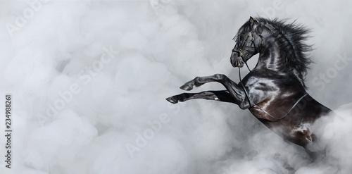 Czarny hiszpański hodowla koni w dymie.