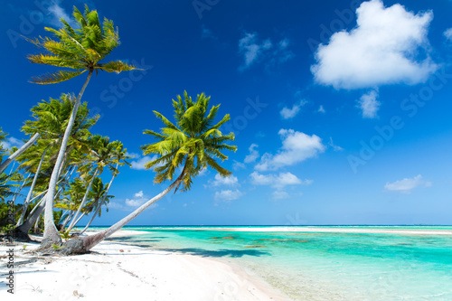 travel, seascape and nature concept - tropical beach with palm trees in french polynesia