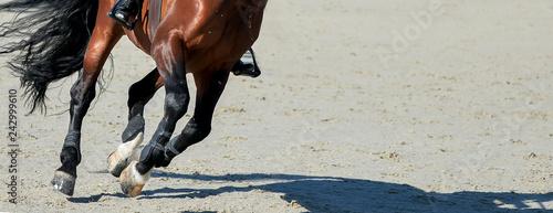Koń i jeździec szczawi ujeżdżenia w mundurze wykonywania skoków w konkursie skoków pokazowych. Tło jeździeckie. Portret konia z Chesnut podczas zawodów ujeżdżeniowych. Selektywne ustawianie ostrości.