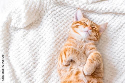 Imbirowy kot śpi