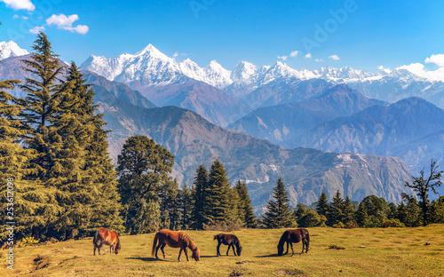 Scenic landscape view with majestic Himalayan Panchchuli mountain range at Munsiyari Uttarakhand India with wild horses grazing the Himalayan pastures.