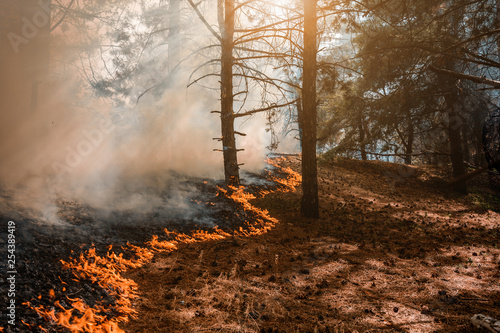 Forest Fire, Wildfire burning tree in red and orange color.