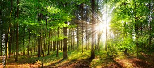 Piękni promienie światło słoneczne w zielonym lesie