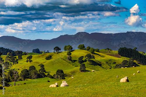 Nowa Zelandia, Wyspa Północna, Region Waikato. Wiejski krajobraz w pobliżu Matamata. W tle znajduje się Zasięg Kaimai