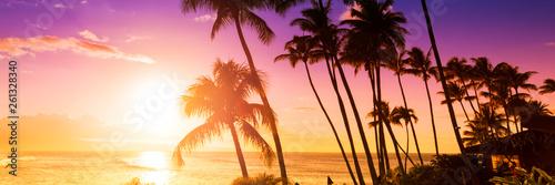 Drzewko palmowe sylwetka na tle tropikalny zmierzch