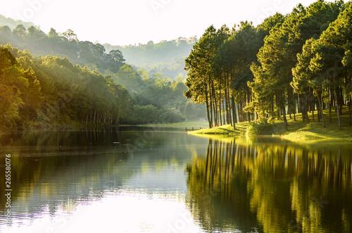 Piękny widok na krajobraz lasu sosnowego i widok na jezioro zbiornika.