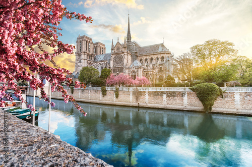 Notre Dame de Paris in spring with japanese cherry blossom trees and blue sky at sunrise. One week before the destructive fire on the 15.04.2019. Paris, France.