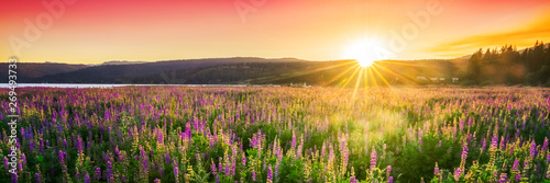 Sunset over field with wild flowers, spring blossom