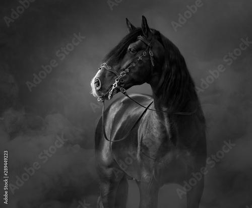 Czarno-biały portret czarnego konia andaluzyjskiego w lekkim dymie.