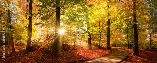 Nasłoneczniona ścieżka w parku przed zmierzchem
