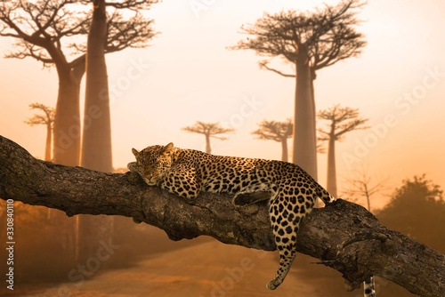 Beautiful shot of a leopard sleeping on the tree - great for a background