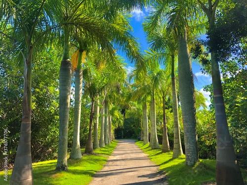 Naples Zoo palm tree walkway