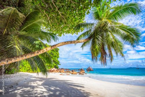 palm tree on tropical beach anse lazio in paradise on praslin, seychelles