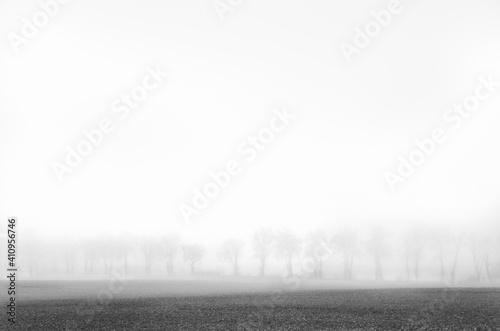 Minimalistyczny zimowy krajobraz, pole, droga i bezlistne drzewa