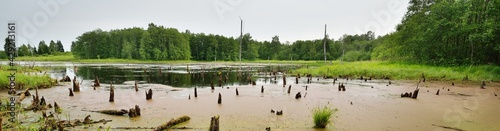 Small river (swamp, bog) in a green summer northern forest. Mighty deciduous trees. Moss, fern, plants, tree logs. Atmospheric landscape. Pure nature, climate, seasons. Panoramic view