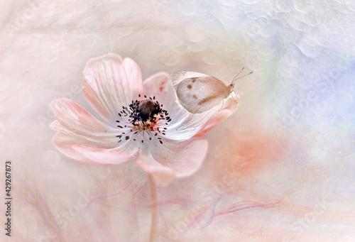 Motyl na Zawilcu (Anemone) kompozycja pastelowa. White flower
