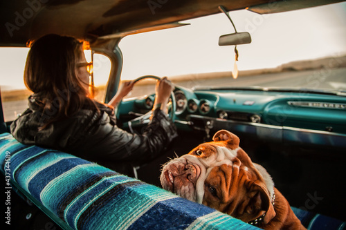 person in a car with bulldog