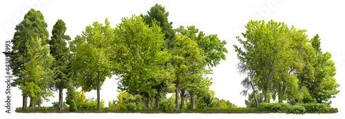 Cutout tree line. Forest and green foliage in summer. Row of trees and shrubs isolated on white background. Forest scape.