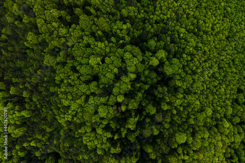 Aerial view of dark mixed pine and lush forest with green trees canopies.