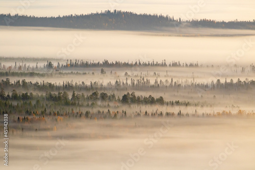 Fog covering the taiga forest landscape in the morning in Finnish nature, Northern Europe