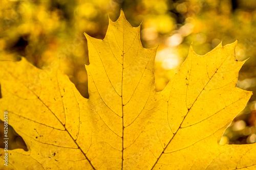 jesienny las i jesienne żółte liście