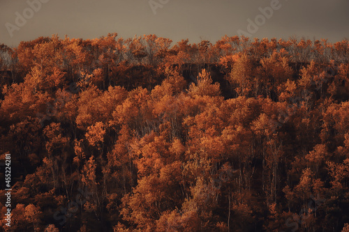 autumn taiga forest landscape, nature view fall in the mountains
