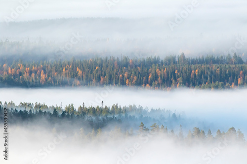 Fog covering colorful large taiga forest landscape in autumn morning during sunrise in Finnish nature near Kuusamo, Northern Europe