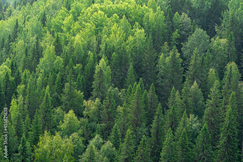 background, landscape - tops of trees in the forest from a bird's eye view