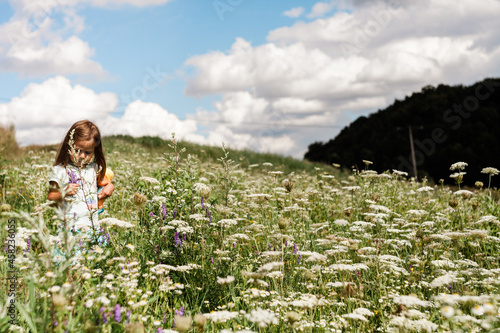 kwietna łąka w piękny słoneczny dzień, kwiaty na łące, naturalna łąka